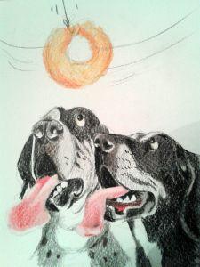 04_Hunde